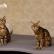 tosya-and-dgray-majorcats-4